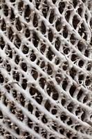Lattice pattern in Giant Loebelia, Bale Mountains, Ethiopia by Martin Zwick - various sizes