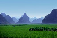 Farmland with the famous limestone mountains of Guilin, Guangxi Province, China by Charles Sleicher - various sizes, FulcrumGallery.com brand