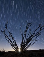 The setting moon is visible through the thorny branches on an ocotillo, California Fine Art Print