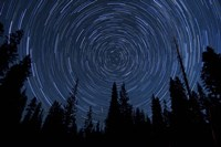 Star trails and a meteor above pine trees in Lassen Volcanic National Park Fine Art Print