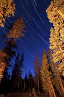 Star trails above campfire lit pine trees in Lassen Volcanic National Park Fine Art Print