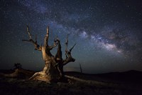 The Milky Way and a dead bristlecone pine tree in the White Mountains, California Fine Art Print