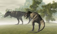 Two Tyrannosaurus Rex rest in the early morning light before the days hunt by Corey Ford - various sizes