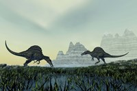 Spinosaurus dinosaurs drink from a marsh area in prehistoric times by Corey Ford - various sizes