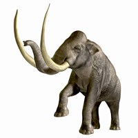 The Columbian Mammoth Fine Art Print