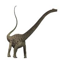 Diplodocus dinosaur by Corey Ford - various sizes