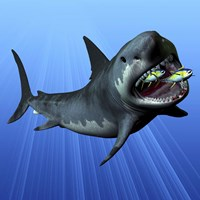 A Cenozoic Era Megalodon devours two swimming tuna by Corey Ford - various sizes