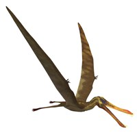 Anhanguera, a genus of Pterosaur from the Cretaceous period by Corey Ford - various sizes