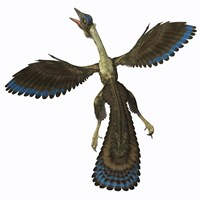 Archaeopteryx, known as one of the earliest prehistoric birds by Corey Ford - various sizes, FulcrumGallery.com brand