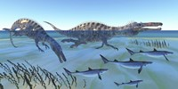 Two Suchomimus dinosaurs hunting small sharks by Corey Ford - various sizes