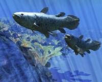 Two Coelacanth fish swimming undersea by Corey Ford - various sizes