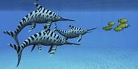 A group of fast swimming Eurhinosaurus marine reptiles Framed Print
