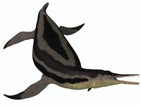 Dolichorhynchops, an extinct genus of short-neck Plesiosaur Fine Art Print