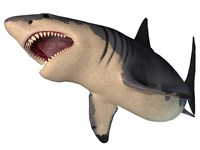 Megalodon shark, an enormous predator from the Cenozoic Era by Corey Ford - various sizes