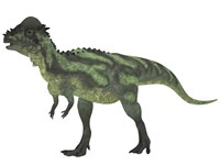 Pachycephalosaurus, a biped dinosaur from the Cretaceous Period by Corey Ford - various sizes - $47.99