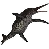 Shonisaurus, a prehistoric ichthyosaur from the Triassic period Fine Art Print