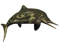 Stenopterygius was an ichthyosaur from the Jurassic Period Fine Art Print