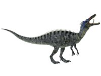 Suchomimus, a large dinosaur from the Cretaceous Period Fine Art Print