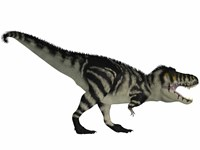 Tyranosaurus Rex, a large carnivore of the Cretaceous Period by Corey Ford - various sizes
