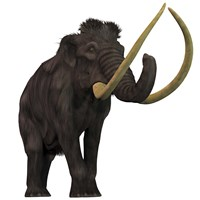 The Woolly Mammoth Fine Art Print