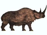 Woolly Rhinoceros, an extinct mammal from the Pleistocene Period by Corey Ford - various sizes - $47.99