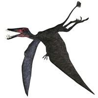 Dorygnathus, a genus of pterosaur from the Jurassic Period Fine Art Print