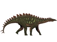 Miragaia is a genus of stegosaurid dinosaur by Corey Ford - various sizes - $47.99