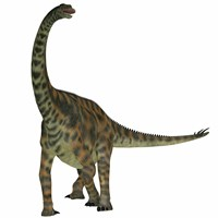 Spinophorosaurus is a sauropod dinosaur from the Jurassic Period by Corey Ford - various sizes