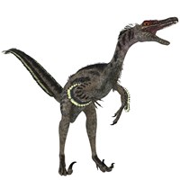 Velociraptor, a theropod dinosaur from the late Cretaceous Period Fine Art Print