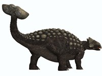 Ankylosaurus, a heavily armored dinosaur from the Cretaceous Period by Corey Ford - various sizes