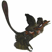 Microraptor, an extinct small flying dinosaur from the Cretaceous Period by Corey Ford - various sizes