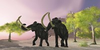 Two Woolly Mammoths searching for better vegetation to eat Fine Art Print