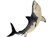 A Megalodon shark from the Cenozoic Era by Corey Ford - various sizes