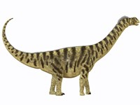 Camarasaurus was a sauropod dinosaur that lived during the Jurassic Age Fine Art Print