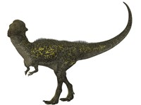 Stegoceras was a herbivorous dinosaur that lived during the Cretaceous Period by Corey Ford - various sizes