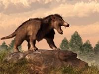 An Arctocyon on a rock by Daniel Eskridge - various sizes