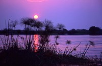 Kenya. Sunset reflects through silhouetted reeds. by Jaynes Gallery - various sizes