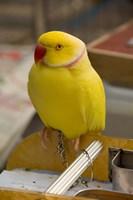 Hong Kong. Bird Garden, parrot tropical bird by Cindy Miller Hopkins - various sizes