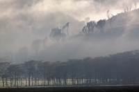 Mist rising from escarpment, Lake Nakuru National Park, Kenya by Adam Jones - various sizes, FulcrumGallery.com brand