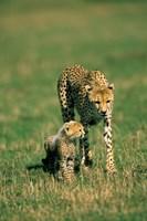 Kenya, Masai Mara Game Reserve, Cheetah with cub Fine Art Print