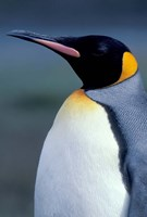 King Penguin, South Georgia Island, Antarctica by Art Wolfe - various sizes, FulcrumGallery.com brand