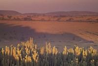 Landscape View, Serengeti National Park, Tanzania Fine Art Print