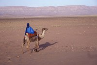 Man in Traditional Dress Riding Camel, Morocco Fine Art Print