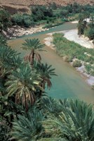 Lush Palms Line the Banks of the Oued (River) Ziz, Morocco Fine Art Print