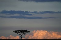 Lone Acacia Tree, Masai Mara Game Reserve, Kenya Fine Art Print