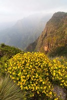 Yellow flowers, Semien Mountains National Park, Ethiopia Fine Art Print