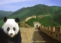 Panda at the Great Wall of China Fine Art Print
