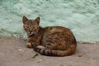 Morocco, Tetouan, Medina of TEtouan, Alley cat by Cindy Miller Hopkins - various sizes