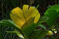 Palm Flora on Praslin Island, Seychelles by Alison Wright - various sizes