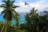 Palm Trees of Anse Victorin Beach, Seychelles, Africa by Alison Wright - various sizes - $40.99
